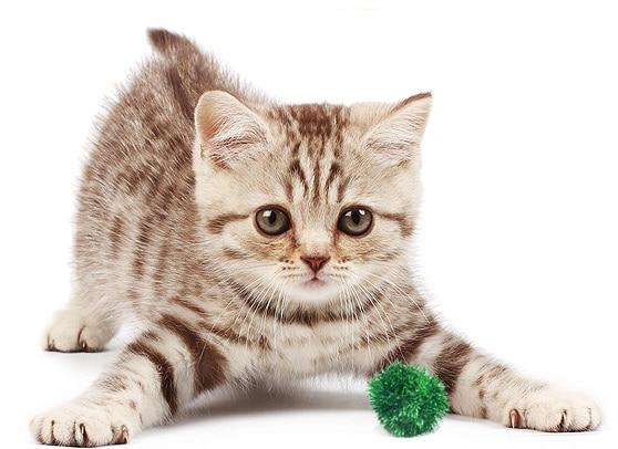 prod_cat